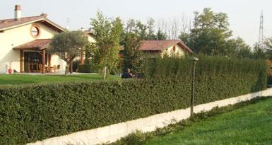 Pin azienda progettazione giardini realizzazione storie di for Progettazione giardini milano